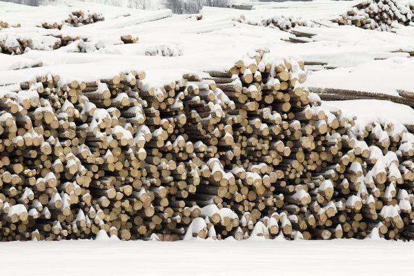 L'industrie forestière lance un SOS