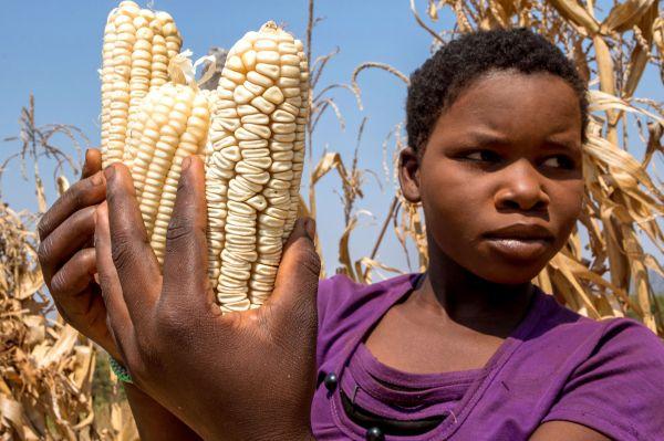 Le Zimbabwe déclare l'état de catastrophe naturelle