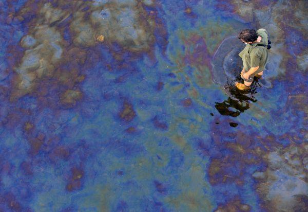 Des poissons intoxiqués au pétrole