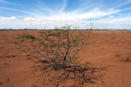 Dans certaines régions du monde, la déforestation et ses conséquences, comme la désertification des terres et le manque d'eau potable, appauvrissent la vie humaine et la rendent souvent sordide. <br />