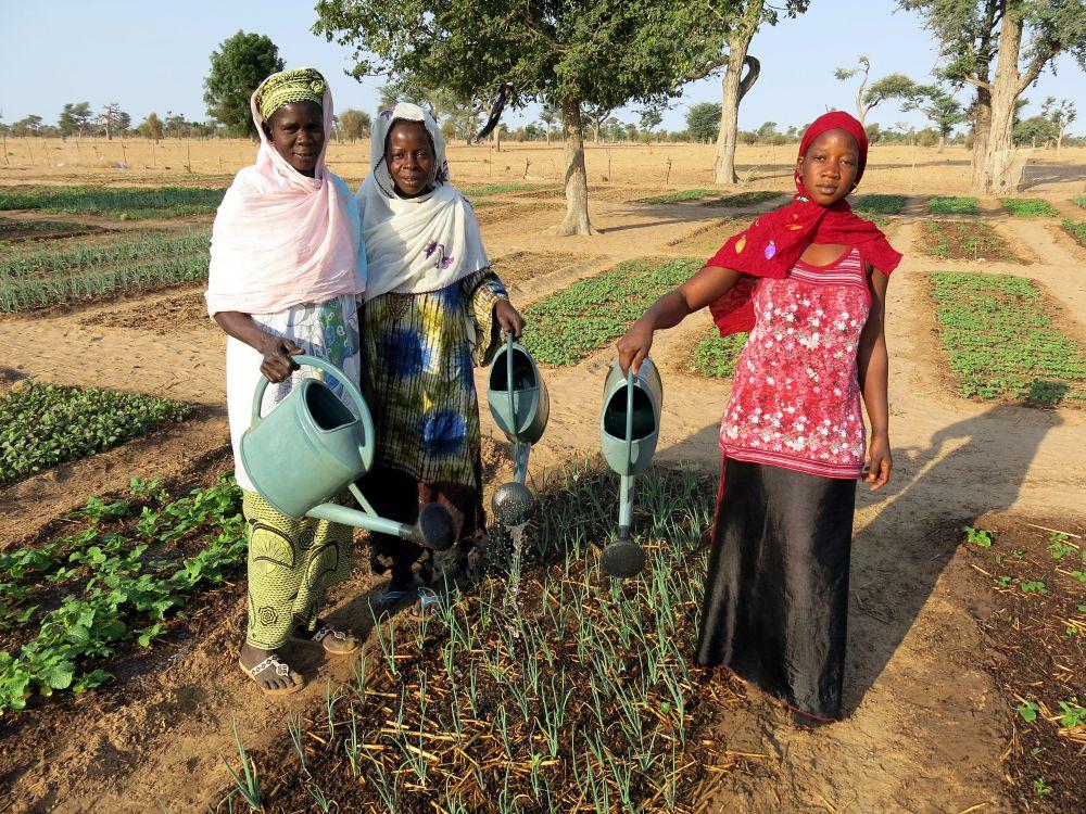 L'agriculture durable au secours du climat